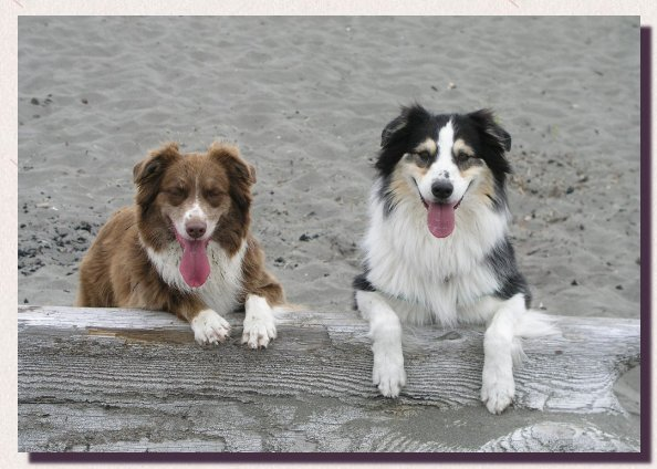 Shasta and Jessie at the beach